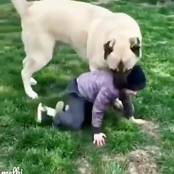 سگسی سگ