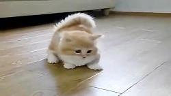 بازی بچه گربه خنده دار