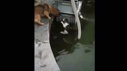 صحنه های بسیار جالب از رفتار شگفت انگیز انواع حیوانات
