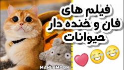 لحظات بامزه و خنده دار از حیوانات کیوت :: فان