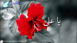 کلیپ تسلیت شهادت حضرت علی - کلیپ شب قدر - توسل به امام علی - التماس دعا