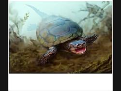 لاکپشت تاریخی