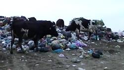 جایگاه زباله تموشل لاهیجان