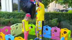 سرگرمی کودک و بانوان - ا...