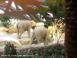 کمک فیل ها به بچه فیل