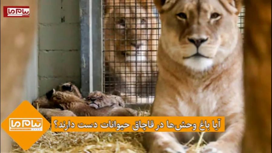 آیا باغ وحشها در قاچاق حیوانات دست دارند؟