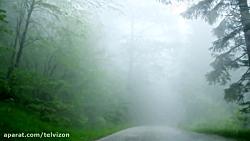 یک ساعت رانندگی در جنگل...