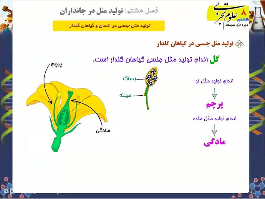 تولید-مثل-جنسی-در-گیاهان-گل-دار-تدریس