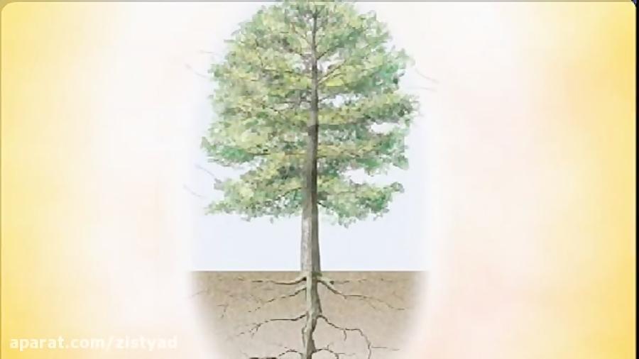جذب-آب-در-گیاهان