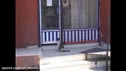 زایشگاه گربه ها