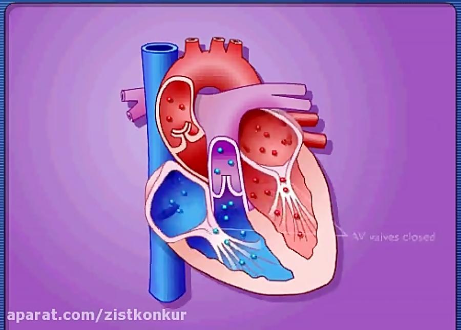 عملکرد-دریچه-های-قلب