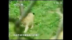 حمله سگ به شیر و ببر