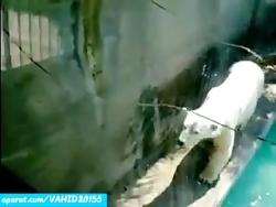 حمله خرس وحشی در باغ وحش به سگ کلیپ جالب و دیدنی