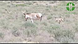 اداره حفاظت محیط زیست شهرستان مهریز