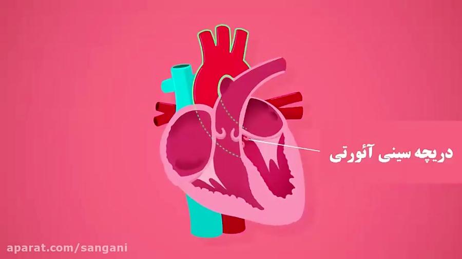 تدریس ساختار قلب