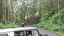 حمله فیل وحشی