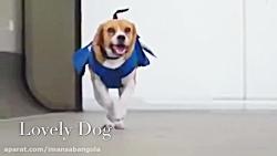 سگ دوست داشتنی (سگ باهوش)