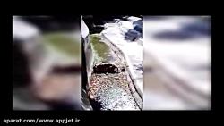 حمله ببر به انسان - نبرد شیر با ببر