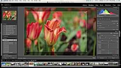 دانلود آموزش آسان لایت روم - ادیت عکس را امروز شروع کنی