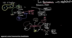پاتوفیزیولوژی دیابت نوع 1