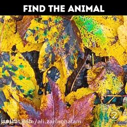 5 ثانیه وقت دارید حیوان پنهان شده رو پیدا کنی!