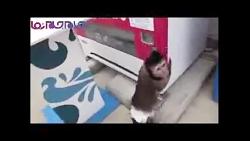 نوشابه خریدن میمون(آخرخنده)