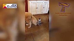 ویدیوی با مزه و جذاب از حیوانات