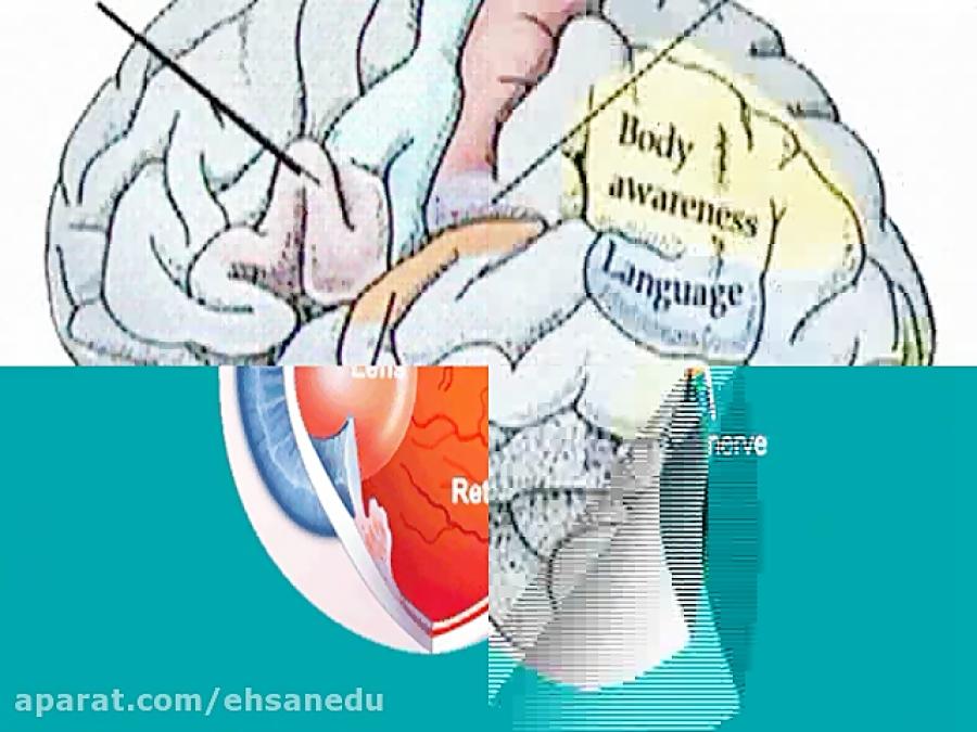 اندام-های-حسی-زبان-بینی-پردازش-اطلاعات-حسی-تدریس