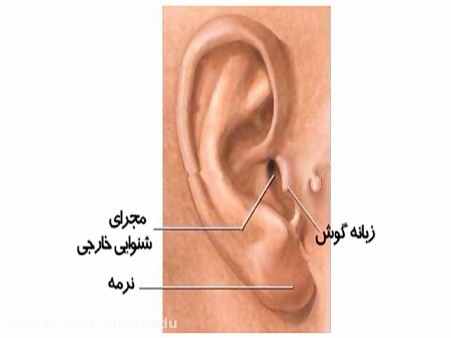 ساختار-گوش-تدریس