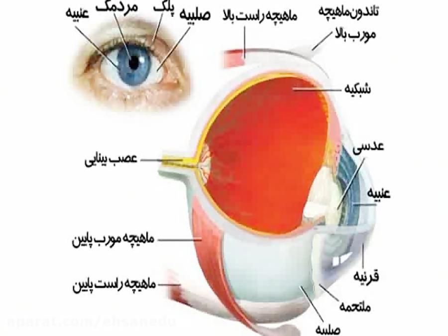 ساختار-چشم-تدریس