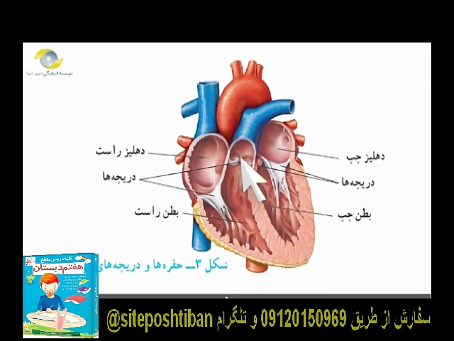 ساختار-قلب-تدریس