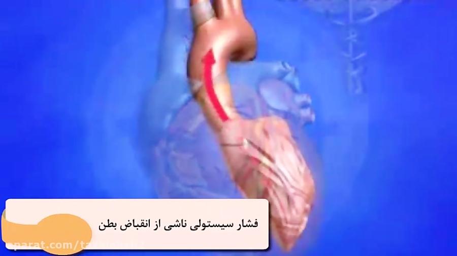 ساختار-رگ-های-خونی-تدریس