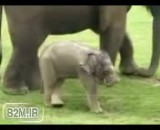 کلیپ دیدنی از بازی یک بچه فیل با خرطومش