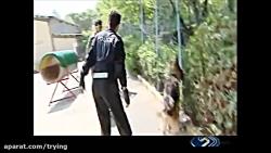 کلیپ دیدنی از سگ های پلیس ایران - جذاب و شگفت انگیز