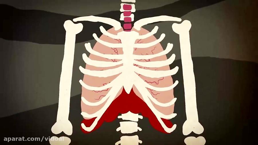 سفر-شگفت-انگیز-اکسیژن-در-بدن-تدریس-ویدوآل