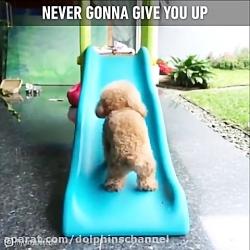 هیچ وقت تسلیم نشوید.