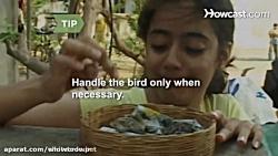 غذا دادن به جوجه پرندگا...