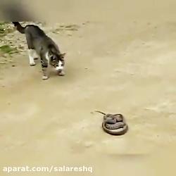 تست کردن سرعت مار یا گربه در حمله بیشتر است