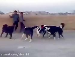 حمله سگ ها به انسان