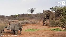 کل کل فیل و کرگدن