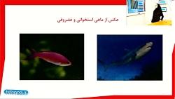 ویدیو آموزشی فصل14 علوم تجربی نهم