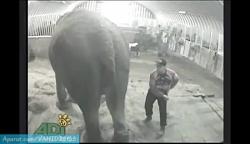 حادثه عجیب کتک زدن فیل توسط مرد روانی