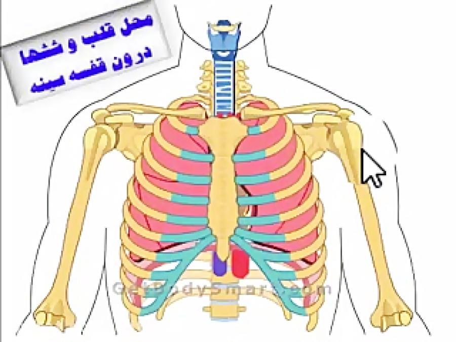 ساختار-و-عملکرد-قلب