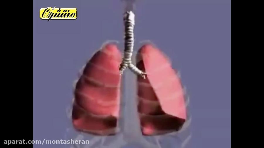دستگاه-تنفس-انسان