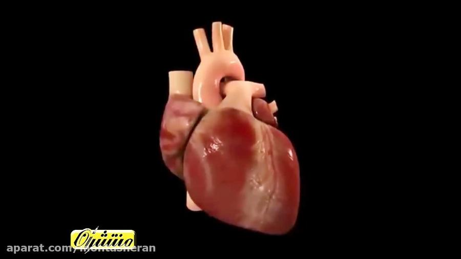 نمایش-ساختار-قلب