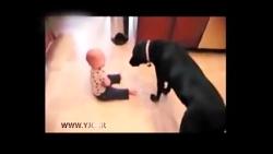 بازی کودکان با سگ
