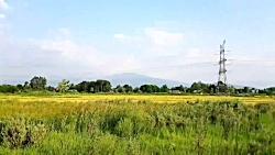 محمود قلی پور