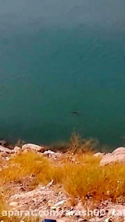 مشاهده سگ آبی در سد طالقان برای اولین بار