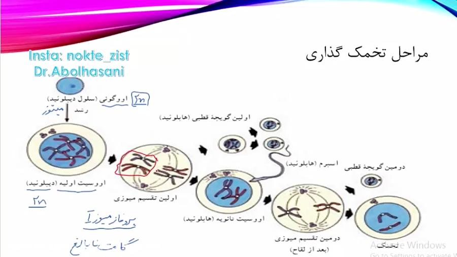 مراحل-تخمک-گذاری-تست-و-تدریس