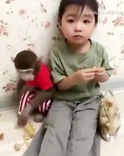 میمون زرنگ